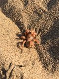 Macro photo of a spider camouflaged on sand Royalty Free Stock Image