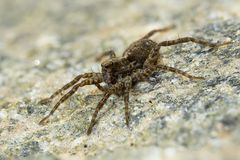 Macro photo of a spider Royalty Free Stock Images