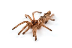 Macro photo of spider`s moult Royalty Free Stock Photos