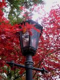 Macro photo of street lamp lighting, colourful maple autumn leaves in red colors for use in design and photo shop Stock Images