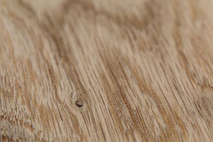 Macro photo of structure of oak wood Stock Images