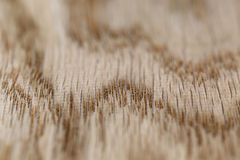 Macro photo of structure of oak wood Royalty Free Stock Image
