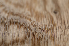 Macro photo of structure of oak wood Stock Photo