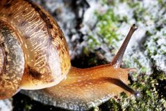 Snail macro photo Stock Photography