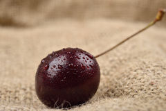 Macro photo of tree red cherries with water drops which are together on one green branch on jute background. Selective focus. Ligh Stock Image