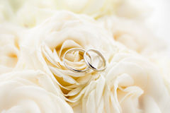Macro photo of two platinum wedding rings lying on white roses Royalty Free Stock Photo