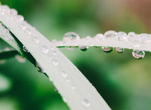 Macro photo of a water drop on the grass Royalty Free Stock Photos