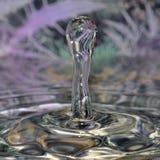 Macro shot of water drops. royalty free stock images