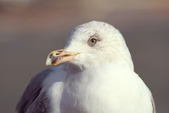Macro Photo of White Bird during Daytime Royalty Free Stock Images