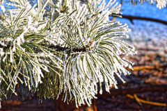 Macro photo. Winter forest, more yellow leaves and branches of trees covered with frost crystals. Stock Images