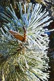 Macro photo. Winter forest, more yellow leaves and branches of trees covered with frost crystals. Royalty Free Stock Photos