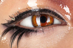 Macro photo of wman eye with wet make up Stock Image