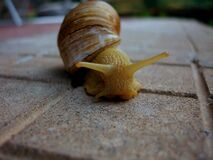 Macro Photo of Yellow Snail on Ground Royalty Free Stock Photo