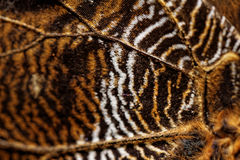 Macro photograph of a butterfly wing Royalty Free Stock Image