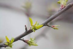 Macro Photograph of Green Leaf Plant stock photos