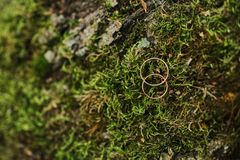 Macro Photograph of Wedding and Engagement Rings sitting on top of Moss. Green background stock photo