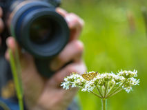 Macro Photographer in action Royalty Free Stock Photos