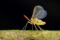 Macro photographie Images stock