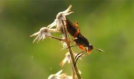 Macro photographie d'insecte Photos stock