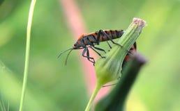 Macro photographie d'insecte Images libres de droits
