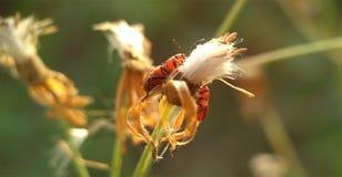 Macro photographie d'insecte Photographie stock libre de droits