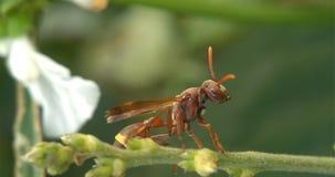 Macro photographie d'insecte Image libre de droits