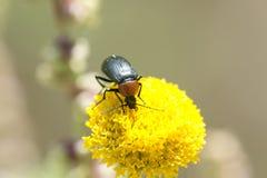 Macro photographie d'une consommation d'insecte photo libre de droits