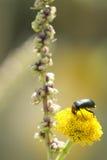 Macro photographie d'une consommation d'insecte photographie stock libre de droits