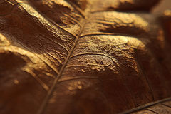 Macro photographie d'une feuille Photo libre de droits