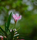 Macro photographie d'une fleur image libre de droits