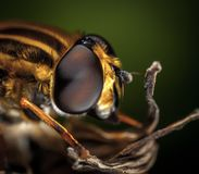 Macro Photography of Bee stock images