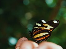 Macro Photography of Beige, Orange, White, and Black Butterfly on Human Hand Royalty Free Stock Photo