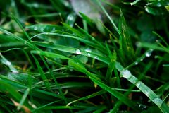 Macro Photography of Blade of Grass royalty free stock photo