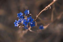 Macro Photography of Blue Petaled Flower Stock Image