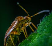 Macro Photography of Brown Beetle on Green Leaf stock photos