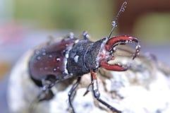 macro photography of bug Stock Image