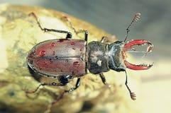 Macro photography of bug Royalty Free Stock Photos