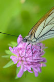 macro photography of butterfly Royalty Free Stock Photos