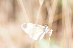 Macro Photography of Butterfly on Plant at Daytime Stock Photo