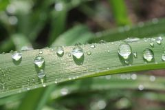 Macro Photography of Dewdrops on Green Plant Stock Photos