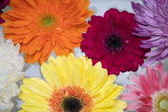 Macro Photography of Flowers royalty free stock images