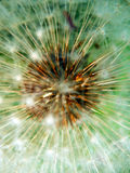 Macro photography of fluffy dandelion Stock Photo