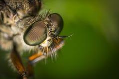 Macro Photography Of Fly Stock Photography