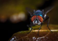 Macro Photography of Fly Perched on Brown Leaf royalty free stock image