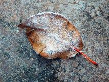 Macro photography of frozen leaf on concrete path Stock Photo