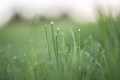 Macro Photography of Grass With Water Drops during Daytime Stock Images