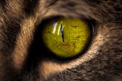 Macro Photography of Green Cat's Eye royalty free stock photo