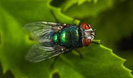 Macro Photography of Green Fly stock photo