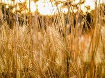 Macro Photography of Green Grass Royalty Free Stock Photo