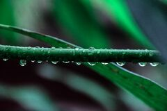 Macro Photography of Green Leaf Plant Stock Image